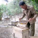 Đặc sản mật ong – du lịch Cát Bà