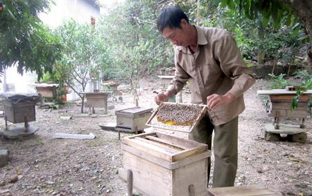 Ong mật khu du lịch Cát Bà