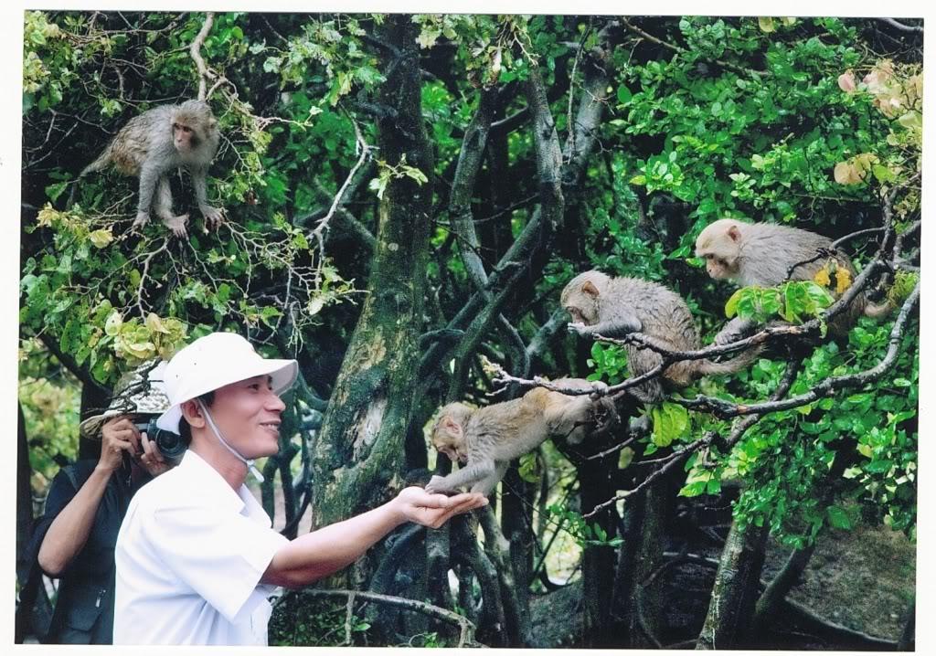 Đảo khỉ - du lịch Cát Bà